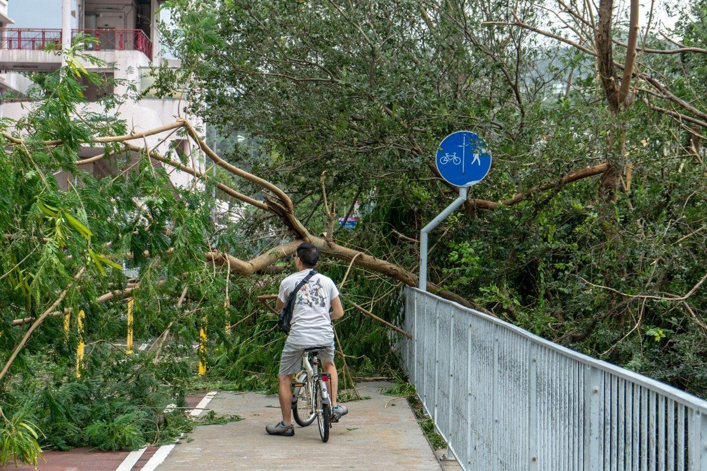 A man on a bike was blocked by fallen trees